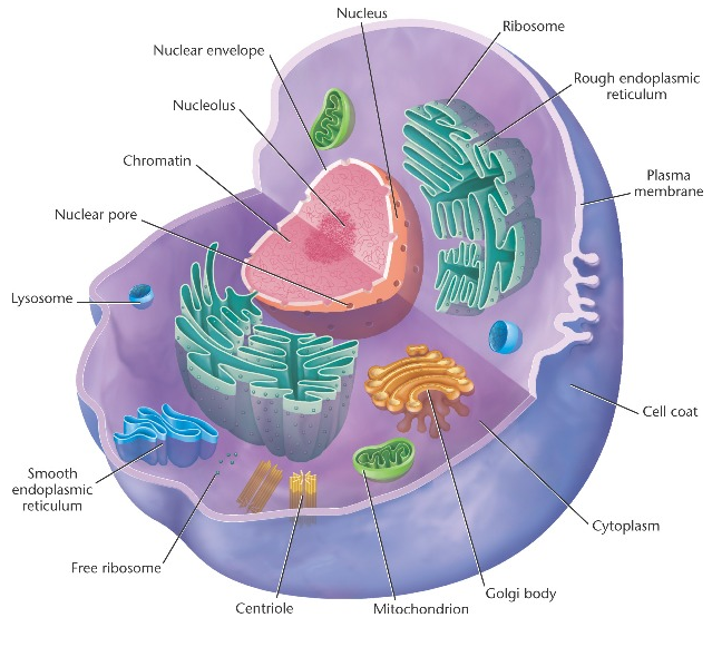 b2 1 cell structure igcse aid