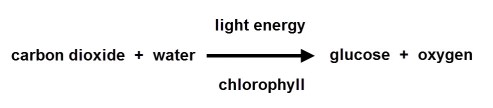 photosynthesis word equation