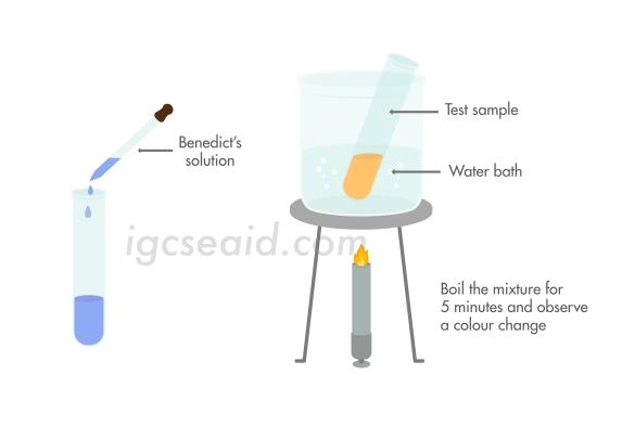 benedict's solution test