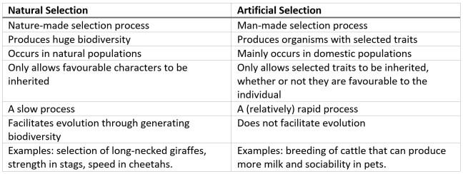 natural selection vs artificial selection table