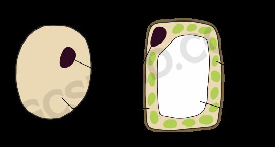 animal vs plant cell basic wm